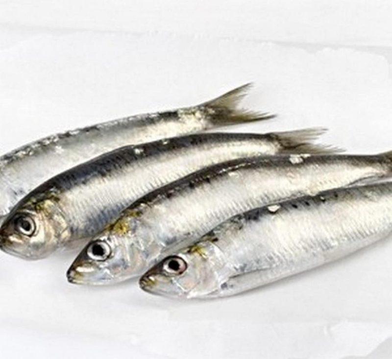 sardina-congelada