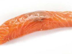 salmón-salar