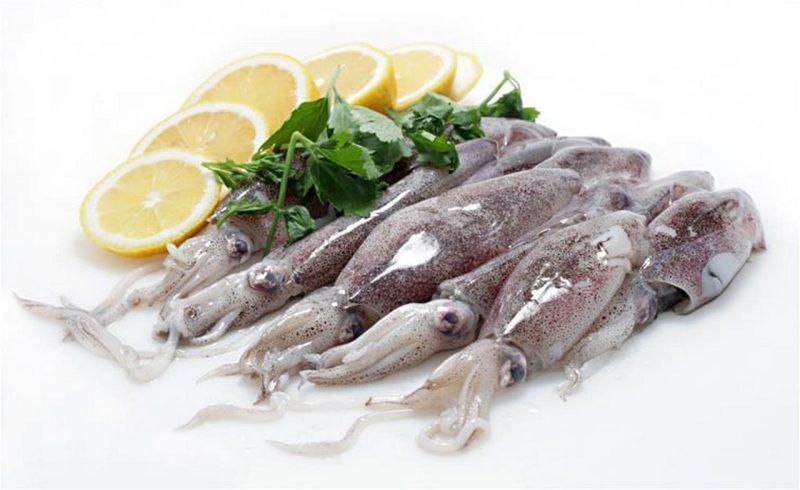calamar patagónico